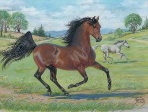 morgan horse painting