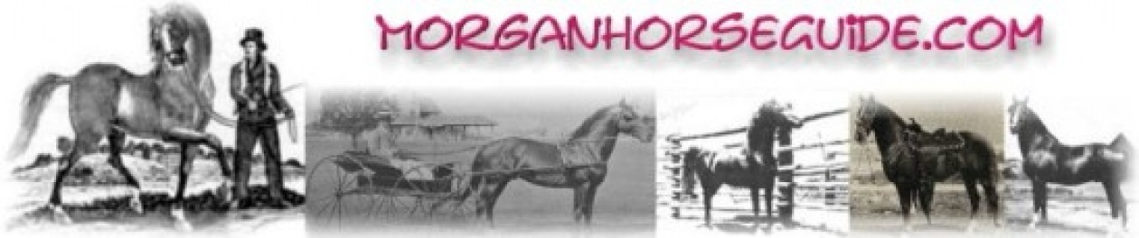 Morgan Horse Guide
